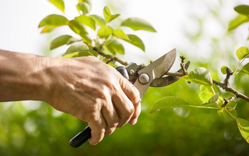 Ruthless gardening