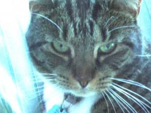 "Pumkin the cat says, ""Happy Halloween."""