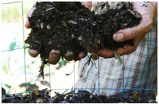 Not All Compost Is Created Equal
