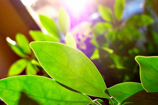 8 Toxin-Filtering Houseplants