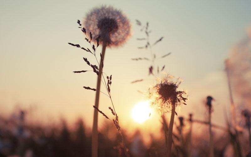 rebirth_sunset