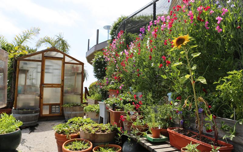 Jane Garden 1
