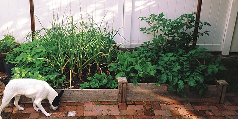 4 Tips for Starting Your Own Urban Garden