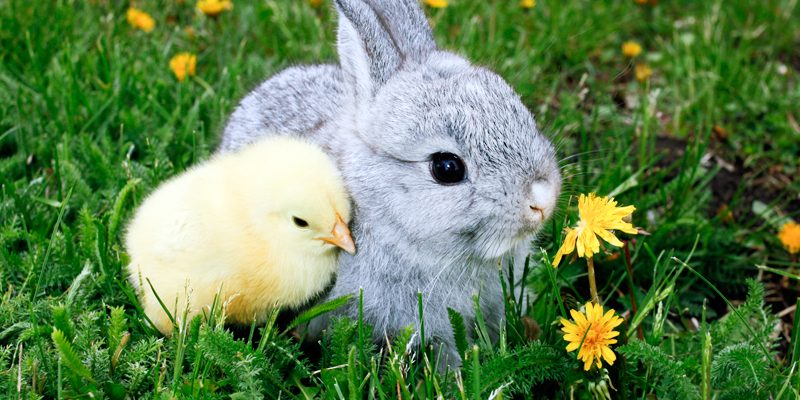 Maria's 5 Favorites: Easter for Everyone!