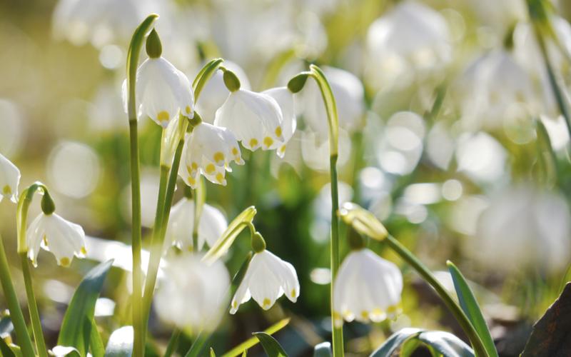 spring newness