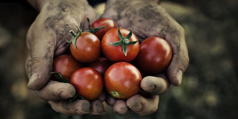 What Eating Organic Food Does for the World