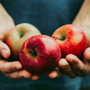 Join us at the Rodale Organic Apple Festival