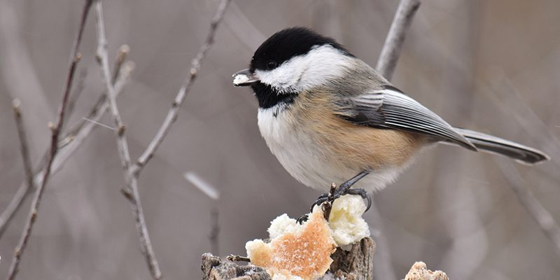 How to Create a Winter Sanctuary for Backyard Birds