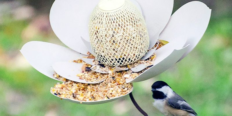 6 Ways to Create a Backyard Bird Paradise